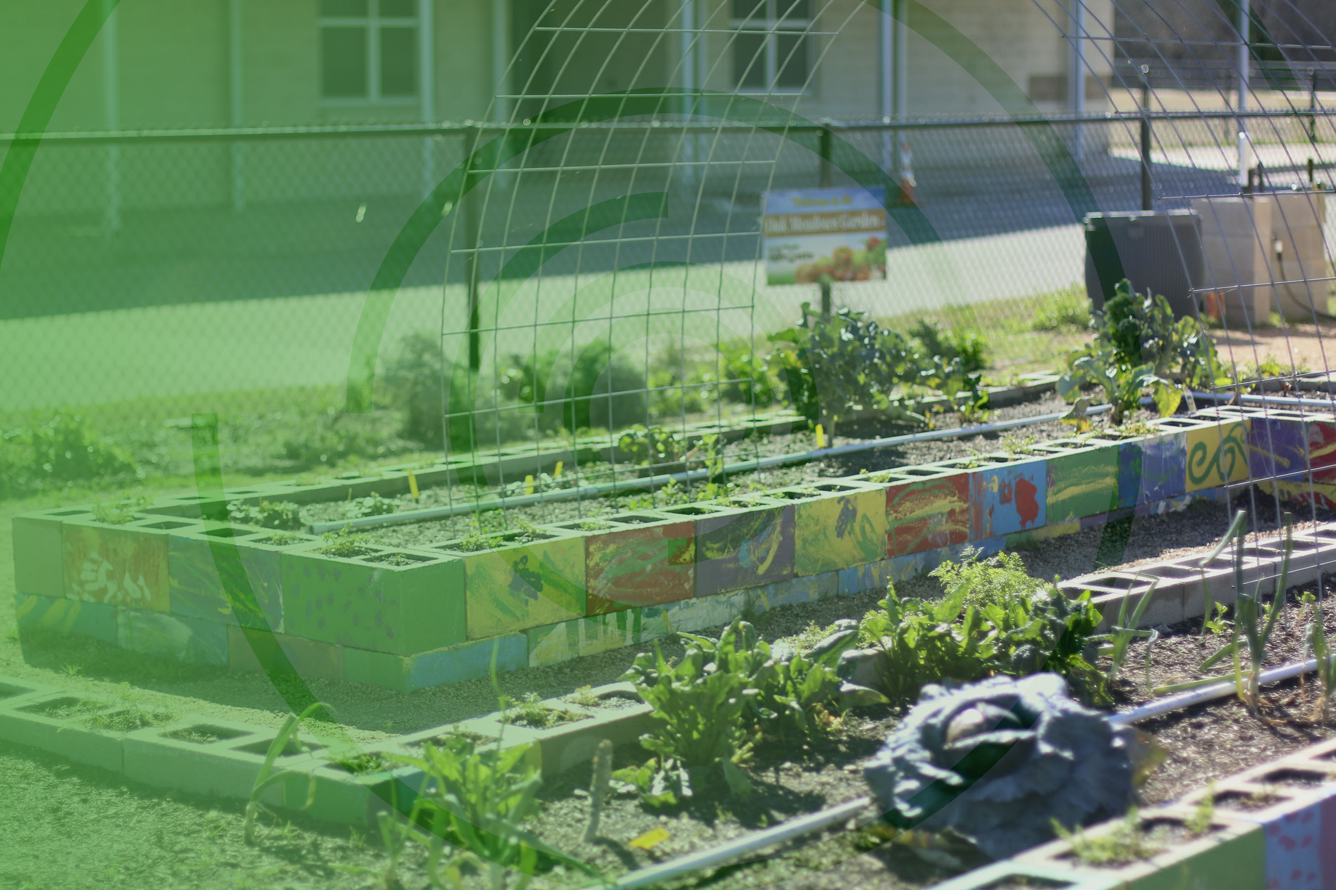 A school garden from the TX Sprouts program