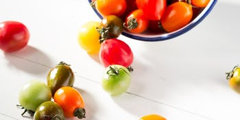Gardening 101: planting and harvesting tomatoes