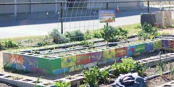 TX Sprouts school garden program improves childhood health